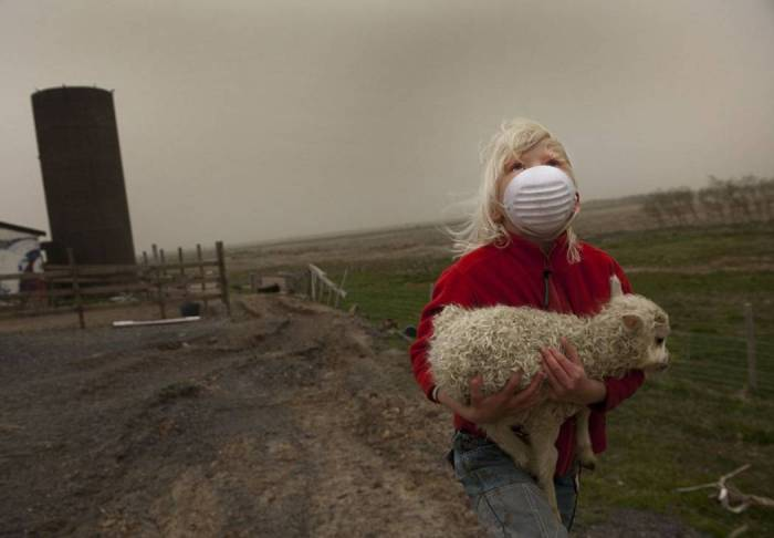 Volcanoes and sheep, kind of sums up Volcanocafé in one image.