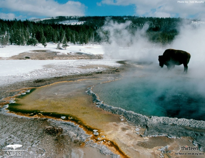 Photograph by Tom Murphy, Yellowstone in Winter.