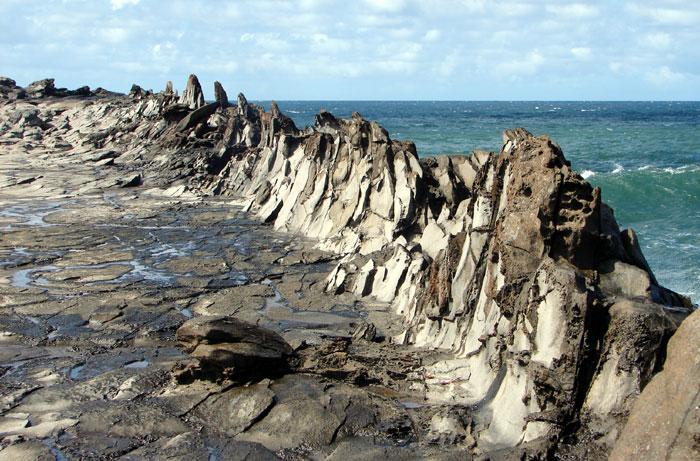Dragon's Teeth - Rejuvenated Lava Flow Maui